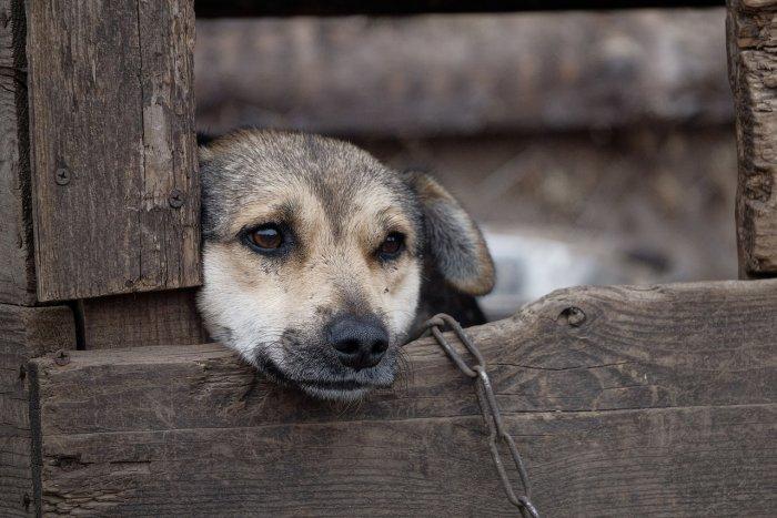 Избавиться от собак Магадан сможет только при изменении подхода к системе отлова животных